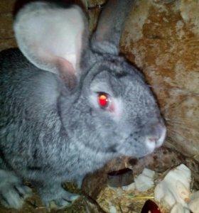 Кролики.козлята