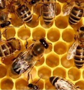 Пчёлы и улья