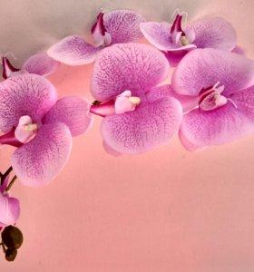 Композиция орхидея в цвету