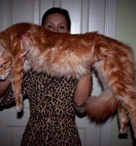 Котята от Мистера Мачо