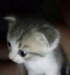 Котята 😺