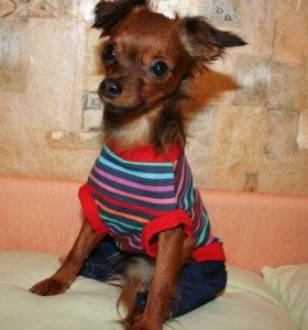 Джинсовый костюм для собаки