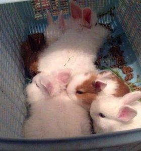 Кролики декоративные для детей и взрослых