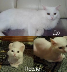 Стрижка кошек и собак