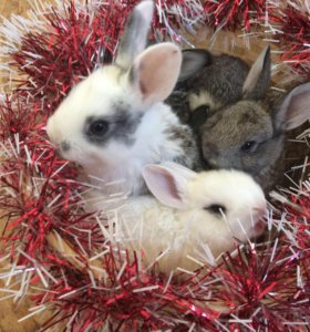 Крольчата -декор