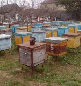 Пчелы, Пчелопакеты