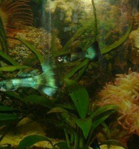 Рыбки своего развода