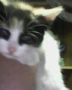 Кошечка кличка Соня