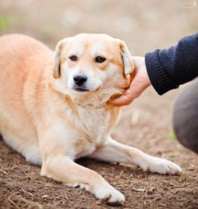 Пёс Лори в дар