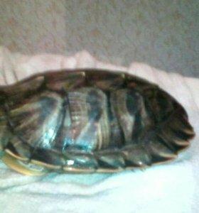 Черепаха и аквариум