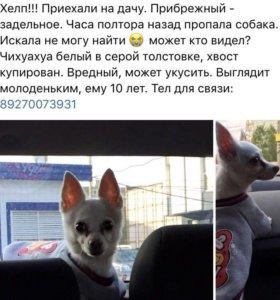 Пропала собака ПОМОГИТЕ НАЙТИ