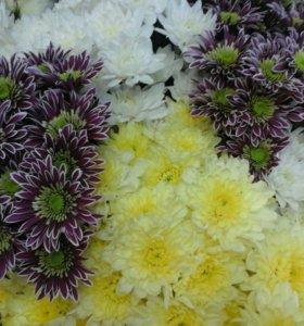 Желтные и белые кустовые цветы