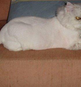Стрижка кошек, котов