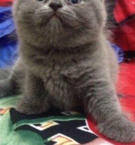 Котики срочно продам