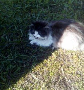 Потерялся кот Вася его мама Юля