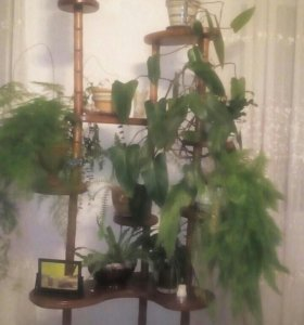 Полка для цветов, дерево