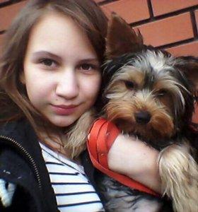 Прогулки с собакой