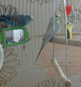 Продам попугаев, с клеткой.