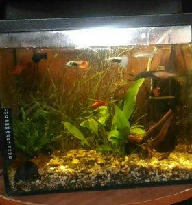 Продам аквариум 20 л с рыбами