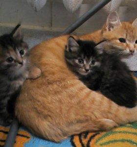 Отдам котиков от кошки мышеловки.