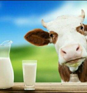 Коровье молоко. с.Александров-Гай