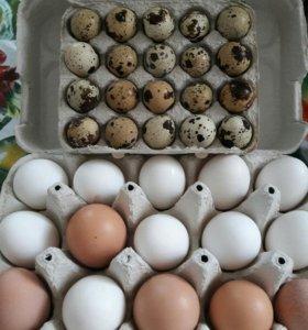 Перепелинные и куриные яйца от домашней птицы