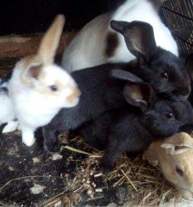 Подам Кроликов и Крольчих