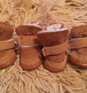 Ботиночки для собачки, размер S