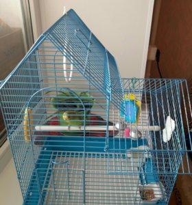 Молодой попугайчик с клеткой