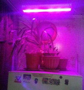Светодиодный фито светильник