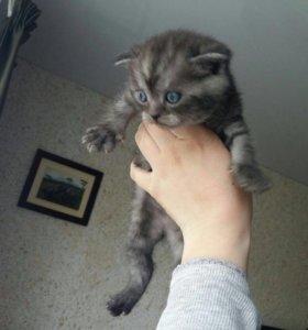 Котята котёнок кошки