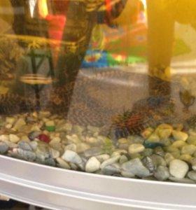 Продам рыб, аквариум