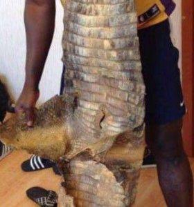 Кожа Крокодила, Питона