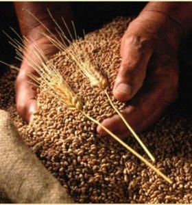 Комбикорма,зерно,горох,кукуруза