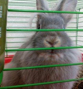 Кролик декоративный.Вместе с клеткой.