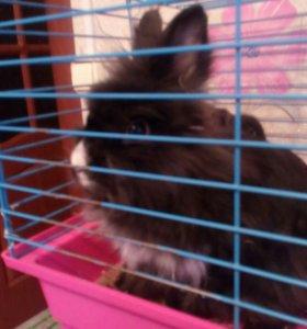 Кролик декоративный. Вместе с клеткой.