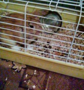 Продам дикоративного кролика. Мальчик 8 месяцев