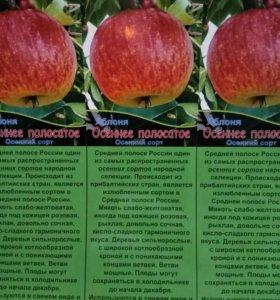 Яблоня. Плодовые деревья ОПТОМ.