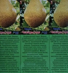 Плодовые деревья ОПТОМ. Груша.