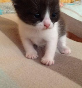 Отдам котёнка -девочку 17 мая ей месяц