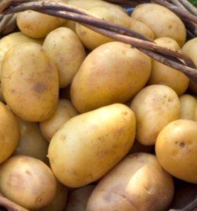 Семенная картошка