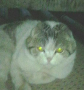 Кот Сёба