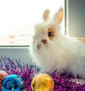 Кролик декоративный с клеткой и прочим