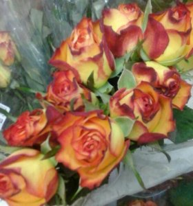 Огненная маленькая роза