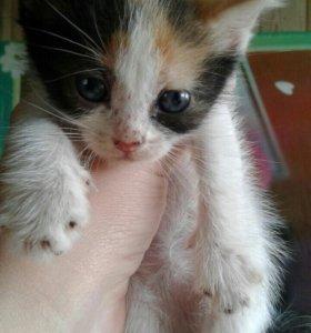 Котята в добрые руки ;)