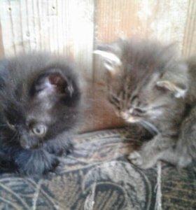 Котята в добрые руки;)