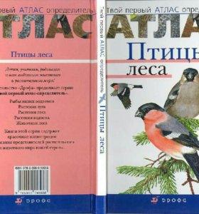 Твой первый атлас-определитель. Птицы леса.
