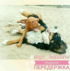 Домашняя передержка для собак