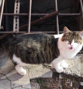 Пушистый кот и пушистая кошечка в добрые руки