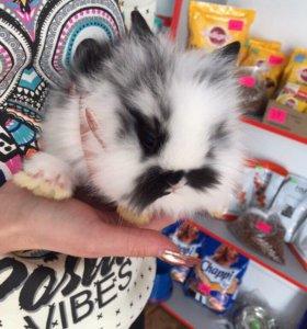 Дикоративный кролик